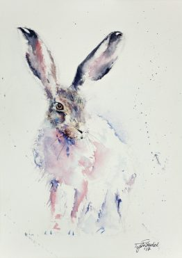 Eastern-Hare
