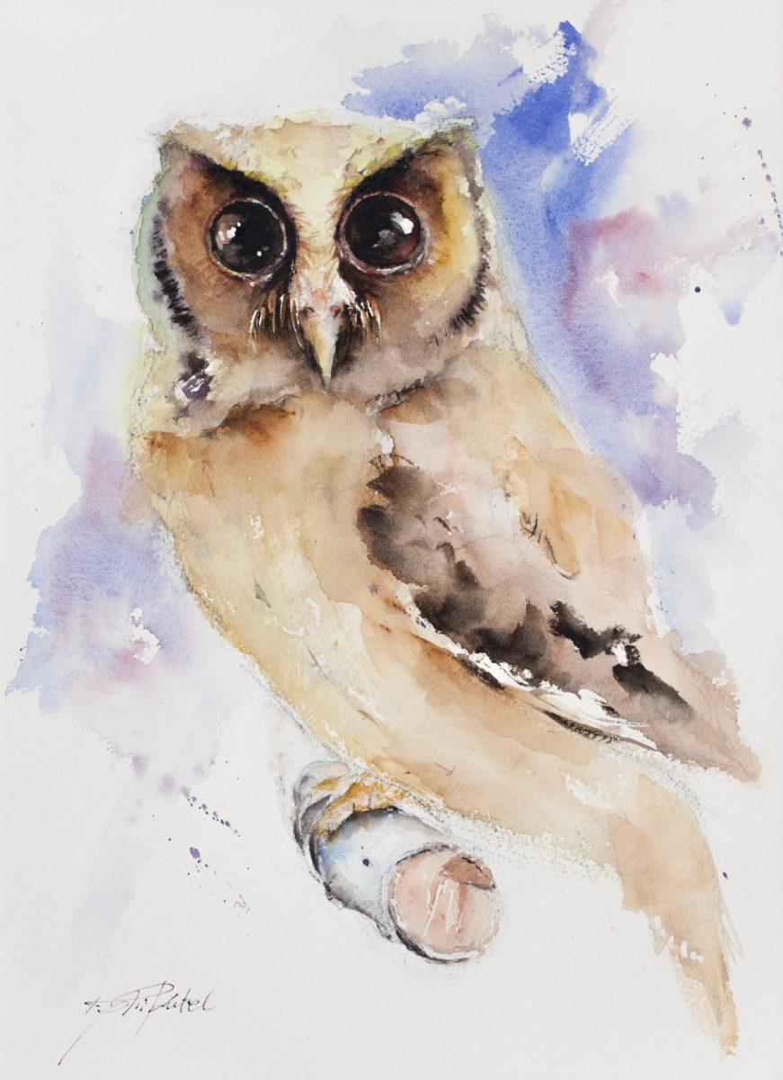 Cute Owl Original Watercolour Painting By Tomasz Mikutel