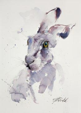 Purple-Hare